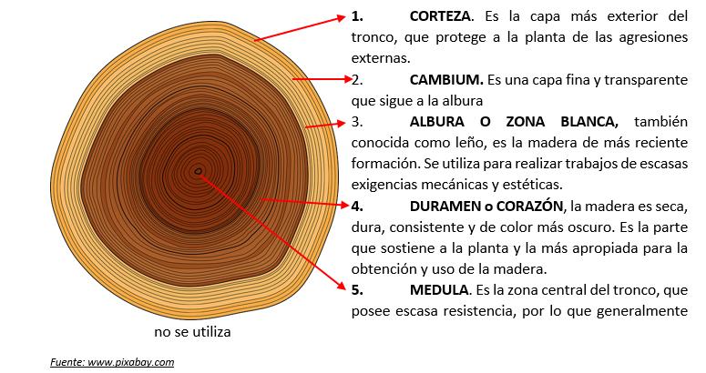Tec2 6 1 la madera constituci n y propiedades generales for Que es la veta de la madera