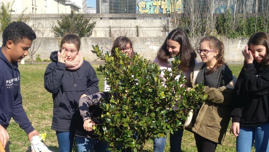 Plantación da árbore