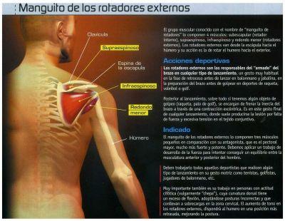 Galería do IES Monte das Moas - Anatomía/Supraespinoso ...