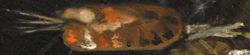 Paleta de Velázquez